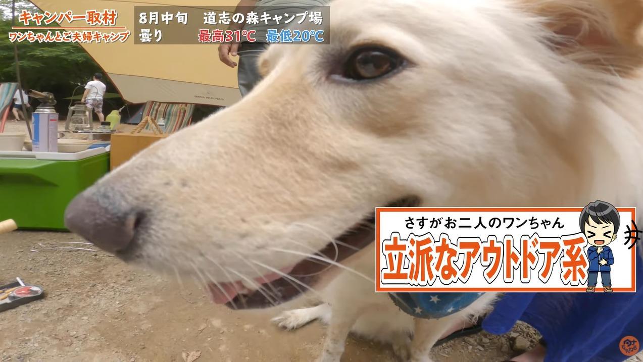 野営もする犬連れキャンパーさんにインタビューするタナ