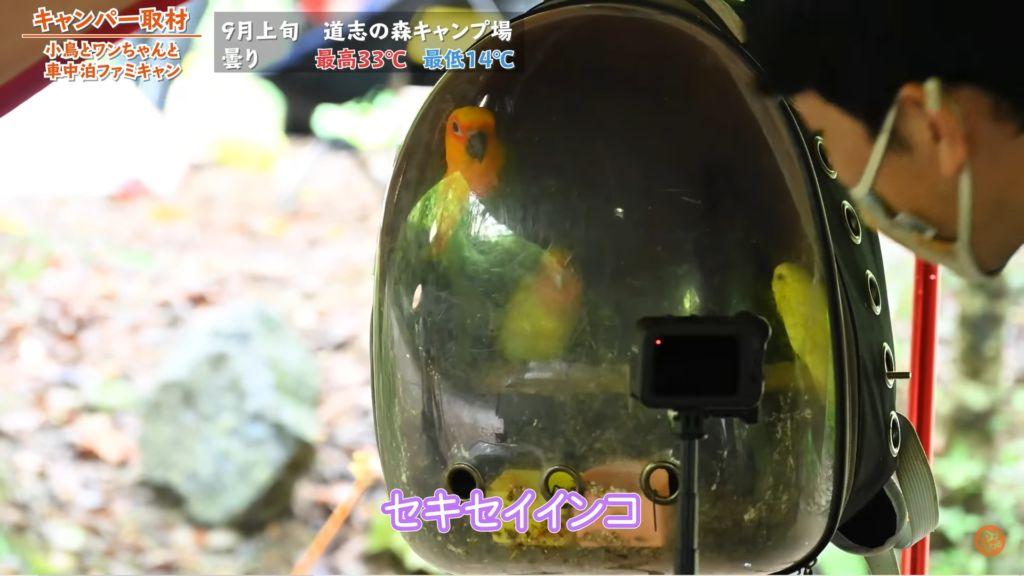 小鳥たちの紹介