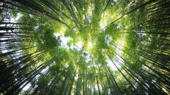 山林相続をするには手続きが必要?相続手続きの方法や注意点を解説